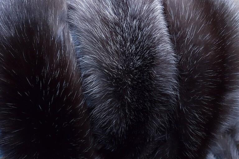 Мех баргузинского соболя: основные признаки и качества